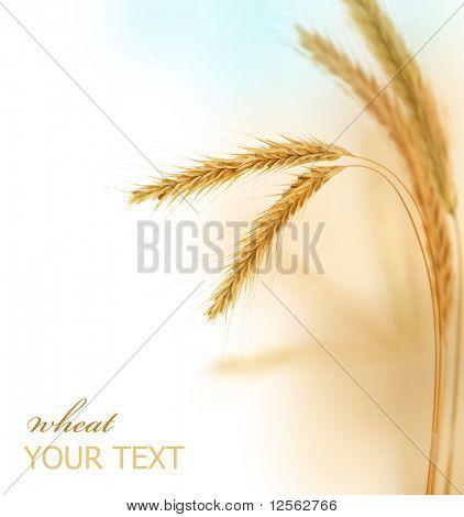Weizen-Grenze