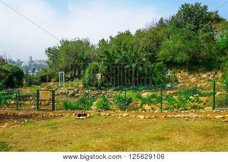 Hashavsheven Community Garden