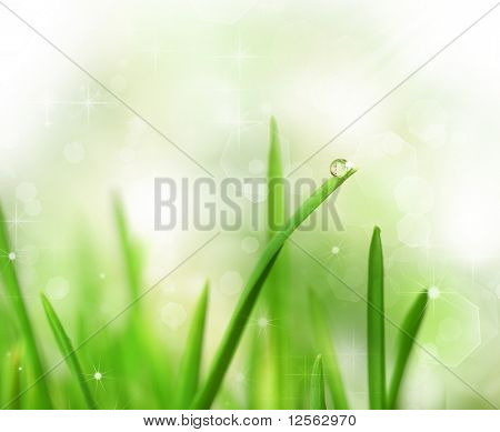 Beautiful Fresh Grass