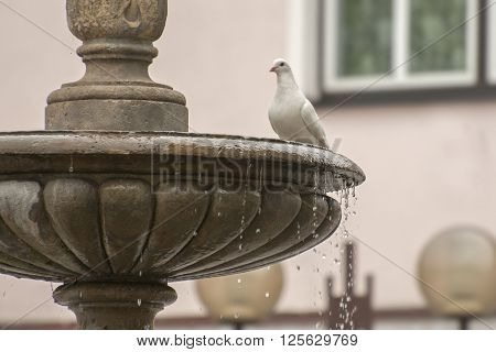 It is image of dove on fountain.