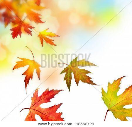 Hojas de otoño hermosos