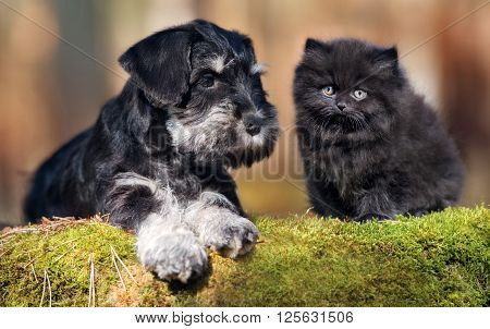 adorable black puppy with a fluffy kitten outdoors