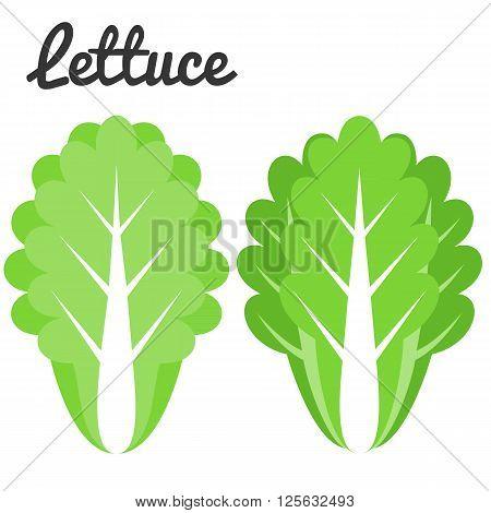 Lettuce vector, flat design on white background