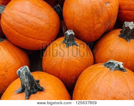 Yellow ripened pumpkin background. Fruits and vegetables background. Stock photo.