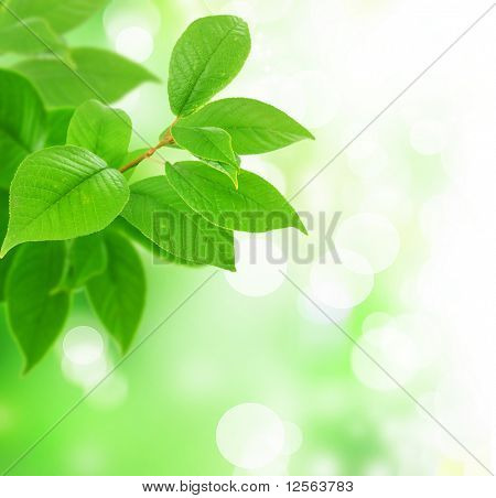 Beautiful Fresh Green Leaves