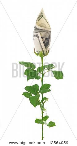 Money Rose.Concept image