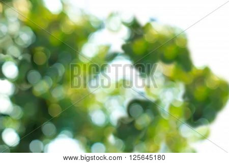 Abstract lilak background with natural bokeh tree