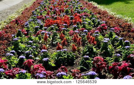 spring flowers in park on Sofia, Bulgaria