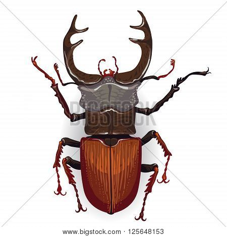 Colorful Vector Drawing Of Stag Beetle.
