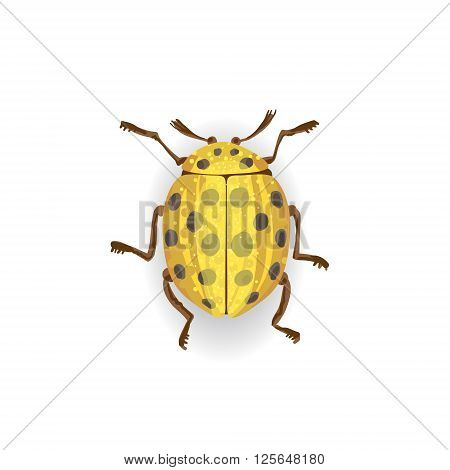 Colorful Vector Drawing Of Yellow Ladybird.