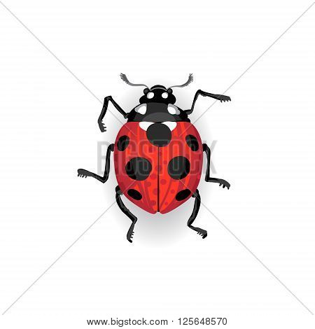 Colorful Vector Drawing Of Red Ladybird.