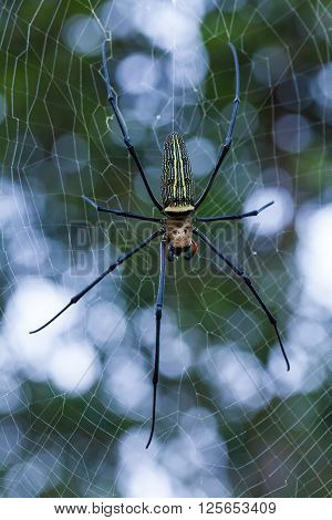 Closeup - Spider on spiderweb (cobweb) against nature bokeh background. Outdoors. Macro.