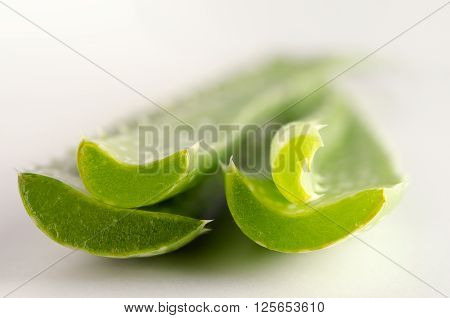 Aloe vera close-up view isolated on white background