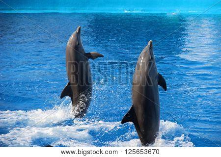 Dolphins in the Oceanarium in Valencia, Spain