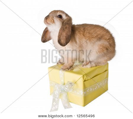 Rabbit On Present