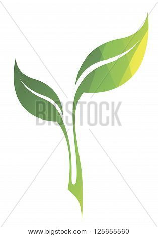 Vector Stylized Silhouette Of Spring Green Tree Leaf Isolated On White Background. Eco Sign, Nature