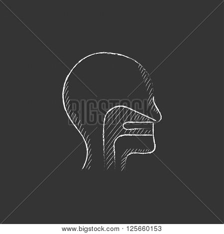 Human head with ear, nose, throat system. Drawn in chalk icon.