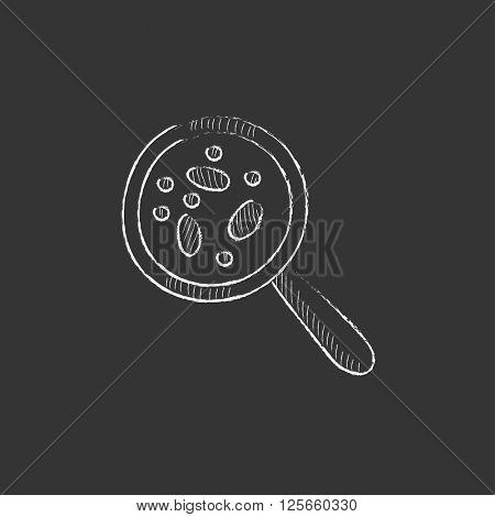 Microorganisms under magnifier. Drawn in chalk icon.