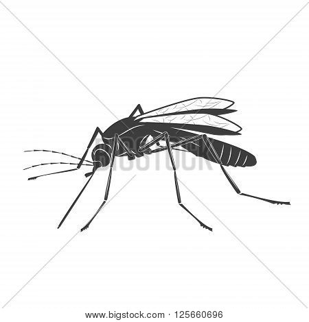 Mosquito illustration on white background. Realistic mosquito. Mosquito silhouette. Mosquito isolated on white background. Zika virus. Vector illustration