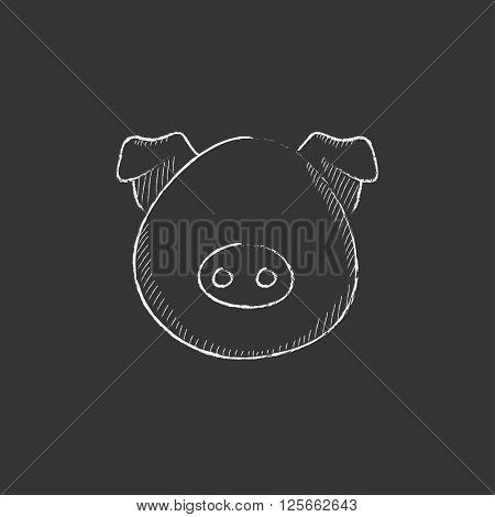 Pig head. Drawn in chalk icon.