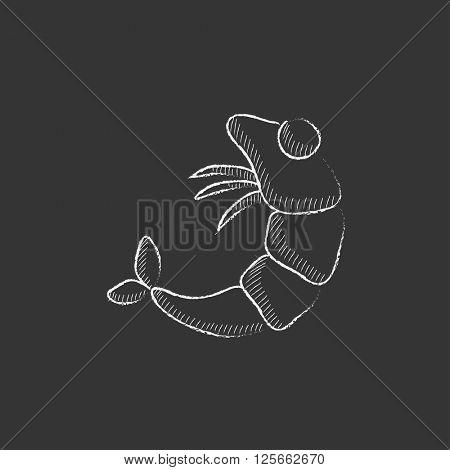 Shrimp. Drawn in chalk icon.