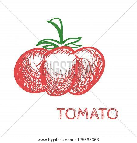 Hand Drawn Tomato Sketch Vector isolated on white illustration