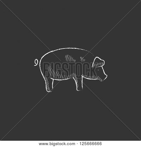 Pig. Drawn in chalk icon.
