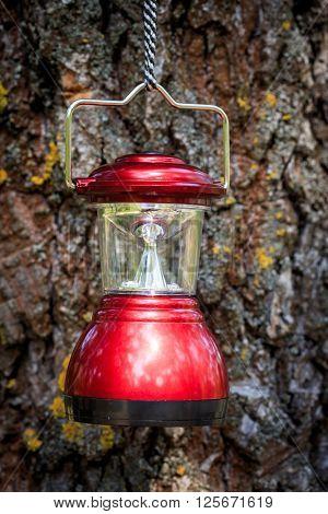 red camp lantern on cortex tree background