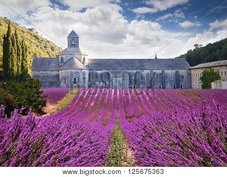 Abbey Of Senanque With Blooming Lavander. Provence, France