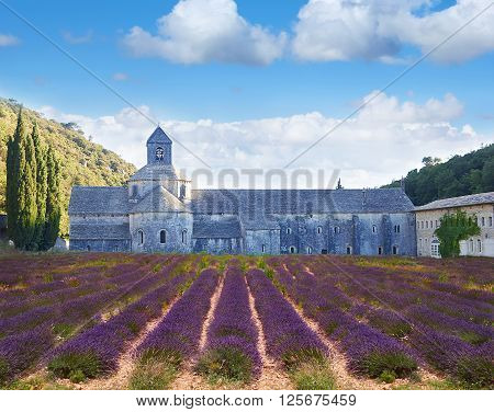 Abbey Of Senanque With Lavander Field. Provence, France