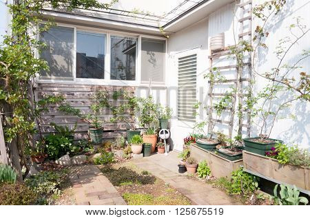 A small self growing urban garden with variety of vegetables.