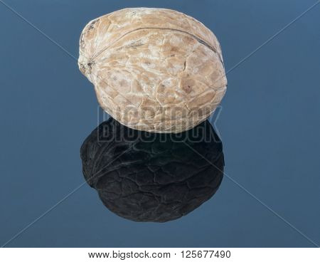Walnut on a dark background. With reflection in the foreground.