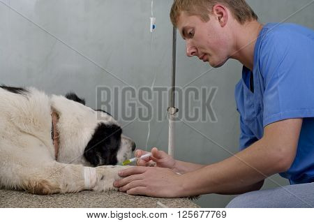 Vet Giving Injection With Syringe