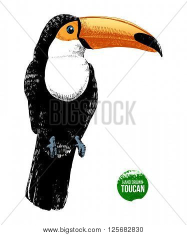 Hand drawn toucan on white background