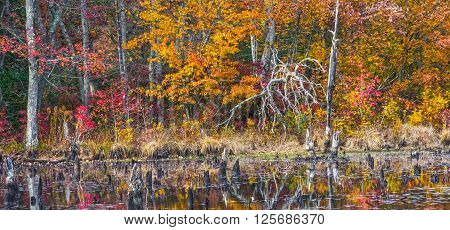 Autumn leaves surround this pond with dead trees in Allaire State Park in New Jersey.