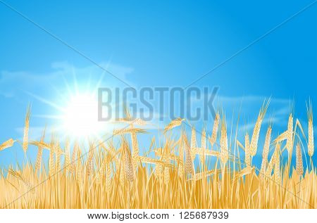 Abstract summer landscape with barley cornfield sky sun and clouds - vector illustration