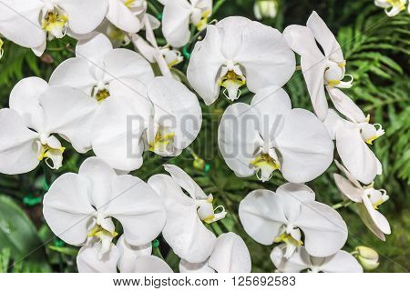 Orchid - Beautiful Orchid Field,sensitive Focus