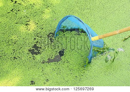 Hand net or dip net with duckweed in the river