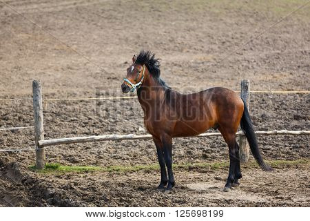 Horse nearby the wooden fence windy spring time