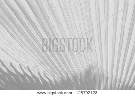 Soft Focus Of Leaf Nature Background, Black And White Tone