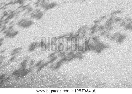 soft focus of leaf nature background Black and white tone