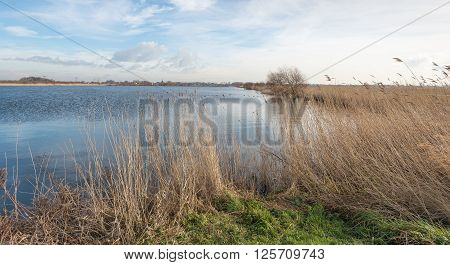 Picturesque image of a small lake with yellowed reeds on the shore. It's a sunny day with a beautiful sky in the winter season