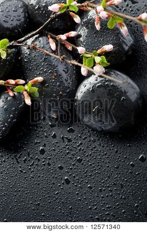 Zen Spa Stones and Spring Blossom