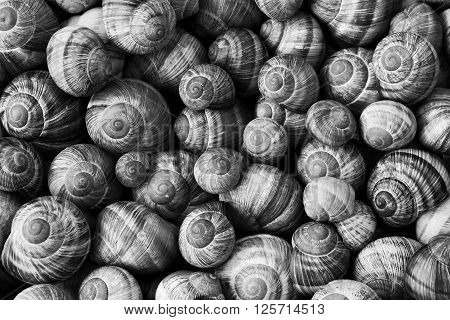 Many black and white snail shells, nature background