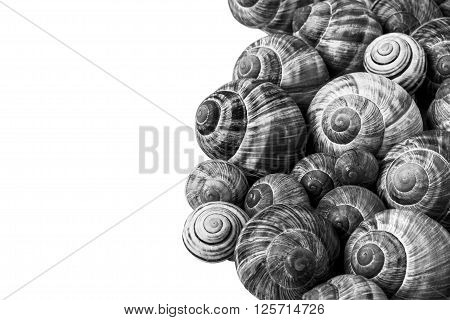 Many black and white snail shells with white background