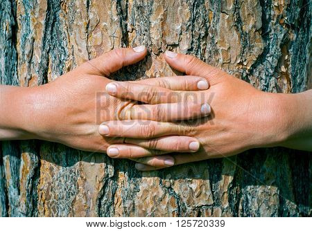 Hands hugging a trunk of a tree.