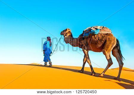 Camel caravan on the Sahara. Africa Marocco