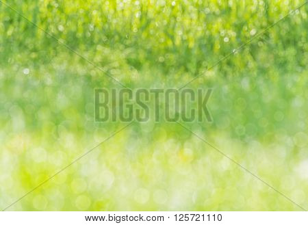 blurred background wet grass in a meadow, dew glistening with sunlight, bokeh