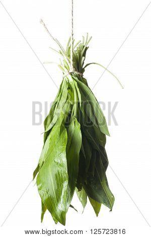 bunch of fresh wild garlic on white ** Note: Shallow depth of field