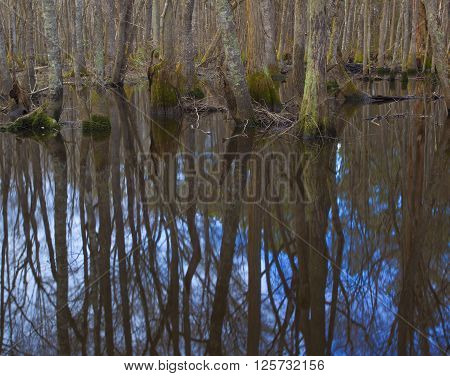 Pool along the Lumber River in North Carolina in the winter